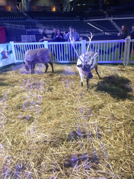 Reindeer Petco